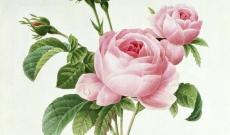 Mignonnne, allons voir si la rose...