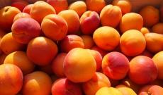 Abricots orangered de Provence