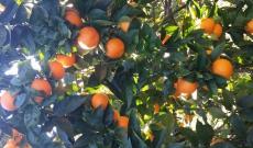 Dans nos jardins de Méditerranée