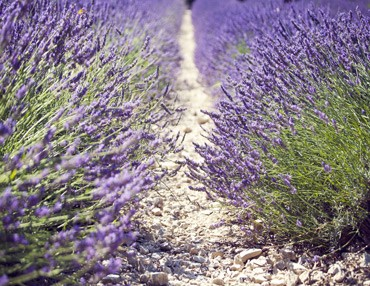 Produits Artisanaux de Provence